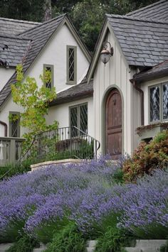 Lavender at Carmel by the Sea. I need to plant Lavender everywhere Lavender Cottage, Lavender Garden, Lavender Fields, Lavender Flowers, Lavander, Cozy Cottage, Cottage Homes, Cottage Style, Storybook Homes