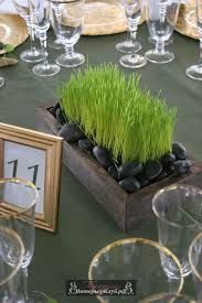 Image result for трава в горшке