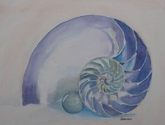 Nautilus with Marble small