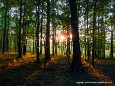 Forest sunset, Mentor Marsh State Nature Preserve by @Sally Kennedy