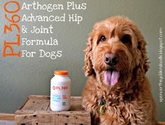 Today on my blog I'm reviewing @pl360pet's Arthogen Plus Advanced Hip & Joint Formula for dogs. Simply click on the link to check it out!