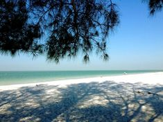 Pine Shaded Spot On White Sand Beach At Fort De Soto State Park Near Clearwater Florida