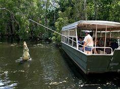 Hartley's Cairns Crocodile Adventures - Crocodile Cruises, Wildlife Shows And Native Animal Displays.