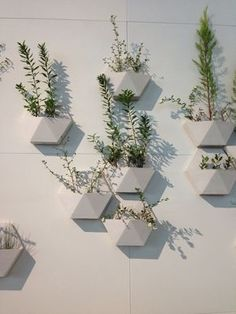Took a pic of these geo wall planters at the LA Auto Show on Friday. In LOVE with them. Anyone know where I can find these??