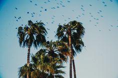 The flock (FaithieImages) French Riviera, Flocking, Photography, Image, Photograph, Fotografie, Photoshoot, Fotografia