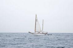 Sail Away | Nicole Franzen