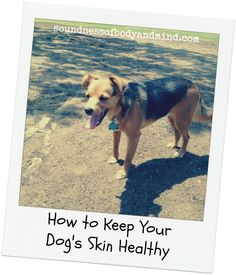 how to keep your dogs skin healthy