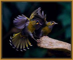 Ver imagenes de aves tropicales