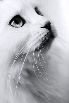Beautiful cat !: