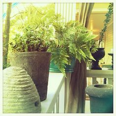 The plants have returned to the porch - @kendralively- #webstagram