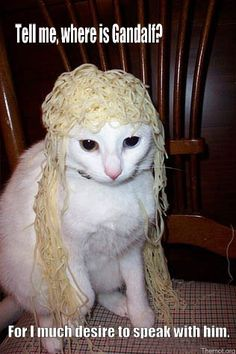 Imagining Celeborn's voice while looking at this cat is priceless.