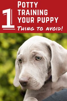 The 1 Thing Not to Do When Potty Training Your Puppy