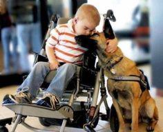 German Shepards: Best dogs <3