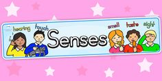 Five Senses Display Banner - Clearly define the different areas of your classroom with our fab range of display banners. Use this one to emphasise the key elements of the topic, and to make your classroom display that bit more lovely! Primary Resources, Free Teaching Resources, Science Resources, School Resources, Teacher Resources, Class Displays, Classroom Displays, Classroom Ideas, Display Banners