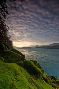 Mossy wonderland, Columbia River, Oregon, USA (by Jesse Estes).
