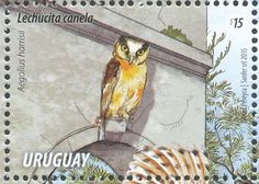 Buff-fronted Owl stamps - mainly images - gallery format