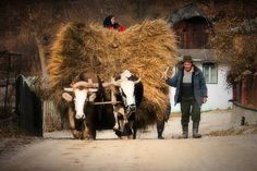 The morning ride. Love Img, City People, Romania, Past, Beautiful, Embroidery, Past Tense