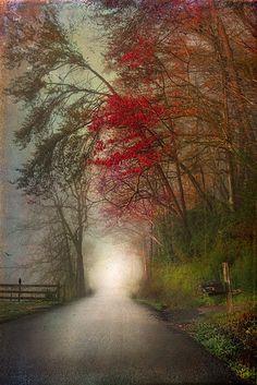 Tennessee mist, morning