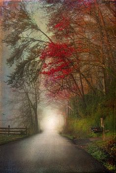 Mystica Road, Tennessee  photo via eli