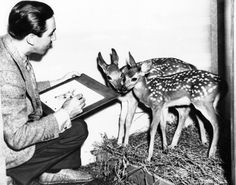 Walt Disney kneels to sketch a pair of fawn, 23 Magical Pictures From The Golden Years Of Disney Walt Disney Studios, Walt Disney Company, Walt Disney Animation, Animation Film, Disney Poses, Magical Pictures, Walter Elias Disney, Disney Animated Films, Mickey Mouse Cartoon