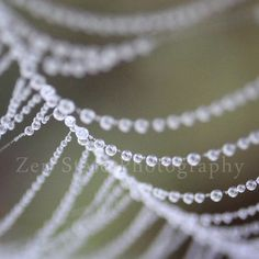 Dew on a Spider Web Photo. Nature Print. Dew Photography Print. Water Droplet Wall Art. Unframed Print Framed Photo Canvas Print.