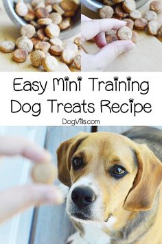 Looking for the perfect homemade mini training dog treats recipe? You'll love this easy recipe! Find out how to make it! You will find interesting recipes for dog on my account. Dog Biscuit Recipes, Dog Treat Recipes, Dog Food Recipes, Dog Training Treats, Dog Training Tips, Training Pads, Brain Training, Grain Free Dog Food, Puppy Treats