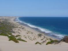 beautiful lucky bay - Western Australia, Kalbarri Western Australia, Westerns, To Go, Beach, Water, Places, Travel, Outdoor, Beautiful