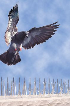 There are several options for bird control. If you can not afford to spend much on the same, you would be glad to know that there are endless products in the market that help in controlling the birds from invading your property.  http://www.amazines.com/article_detail_new.cfm/5370848?articleid=5370848