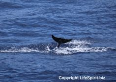 Botte-nosed Dolphin, Mark Conway, Wildlife Photography, Nature