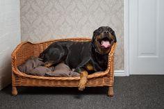 Wicker Dog Bed Settee
