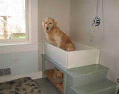 Room of the Day: Laundry Room Goes to the Dogs This pic was in the comments and I like it better than the dog shower