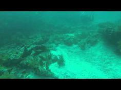 Islamorada Scuba Dive - Key Dive Shop - http://www.florida-scubadiving.com/florida-scuba-diving/islamorada-scuba-dive-key-dive-shop/