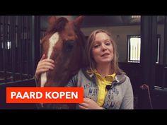 Paard kopen l PaardenpraatTV - YouTube