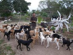 This is Ricardo, a dog hero and a very compassionate human being. There are currently 160 dogs that he's saved in his sanctuary in Mexico. He doesn't have money but his dogs are his priority and he always manages to feed them well and to take good care of them. He has been beaten up for saving a dog that people were purposely trying to run over. And he is AMAZING with his dogs! Thank you so much Ricardo! ♥