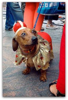 Polish Dog in Crakow, Poland