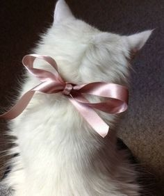 A white fur coat and a pink bow is all it takes to look fabulous! A white fur coat and a pink bow is all it takes to look fabulous! Crazy Cat Lady, Crazy Cats, Animal Gato, Gatos Cats, Photo Chat, White Cats, White Fur, Pink White, Black Cats