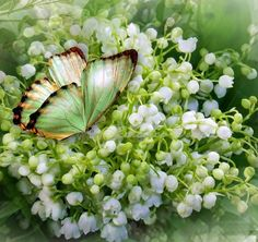 Lilies of the Valley Shabby Flowers, Wild Flowers, Beautiful Butterflies, Beautiful Flowers, Valley Flowers, Love Lily, Pot Plante, Winter Painting, Language Of Flowers