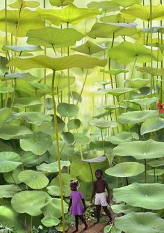 Fern Forest, Jamaica. Ruud van Empel, manipulated photography.