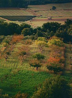 Www.vakantiehuisjevoortwee.nl  Provence Bedoin