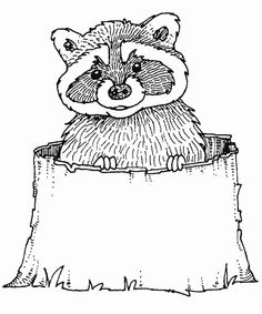 Cute Raccoon Coloring Pages