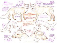 HAKOBUNE - foxes