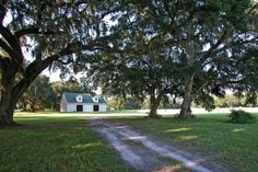 10n Acres under beautiful Oaks in Florida - Under 300k