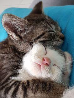 cute cats cuddling snuggles süße katzen kuscheln kuscheln cute cats cuddling snuggles # Memes cute cats - Drawing cute cats - With Captions cute cats Cute Cats And Kittens, I Love Cats, Crazy Cats, Kittens Cutest, Tabby Kittens, Kittens Playing, Funny Kittens, Cute Funny Animals, Cute Baby Animals