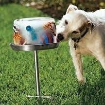 Freeze a bucket full of water filled with dog treats and toys for hours of summer entertainment :)