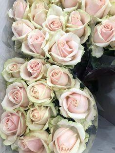 Rose, Flowers, Plants, Pink, Roses, Florals, Plant, Flower, Bloemen