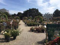 Santa Barbara, Sidewalk, Flowers, Plants, Side Walkway, Walkway, Plant, Royal Icing Flowers, Flower