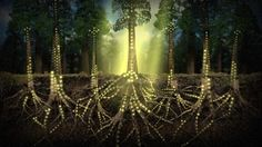 [Tome] | Plants Communicate Using An Internet Of Fungus - TIMEWHEEL