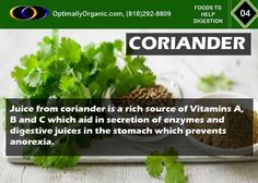 Coriander leaves help in digestion and prevents flatulence when taken with hot water. #organic #healthyliving