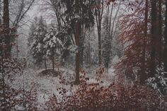 Rain Washed Soul - roteskadi: Bloody winter The strength of. I Love Winter, Winter Snow, Billy Black, Christina Rossetti, Nature Instagram, Pre Raphaelite, Black Christmas, Solitude, Earth