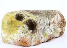 Age, Bacteria, Bio, Biology, Bread, Breakfast, Bug (PUBLIC DOMAIN)